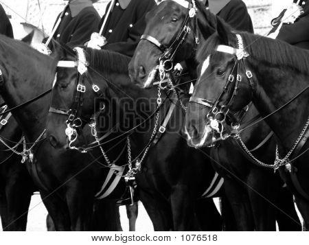 Cavalry 001
