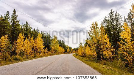 Fall colors in Jasper National Park