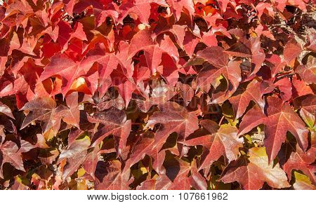 Red carved leaves