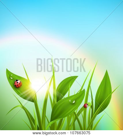 Green Grass, Plantain And Ladybugs With Sunrise And Rainbow
