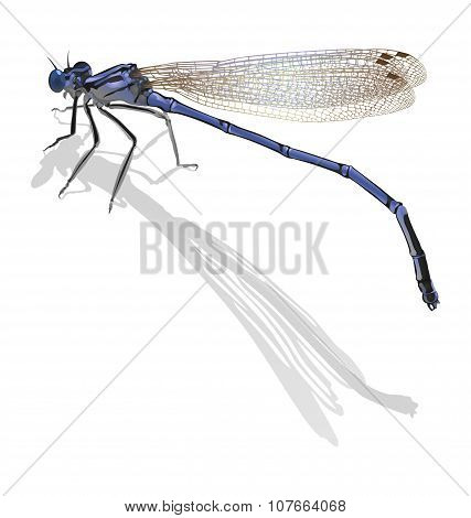 Blue Dragonfly With Folded Wings Isolated On White. Cast A Shado