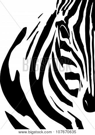 Artistic closeup portrait of a zebra - emphasized black and white graphical pattern.