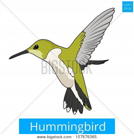Hummingbird learn birds educational game vector