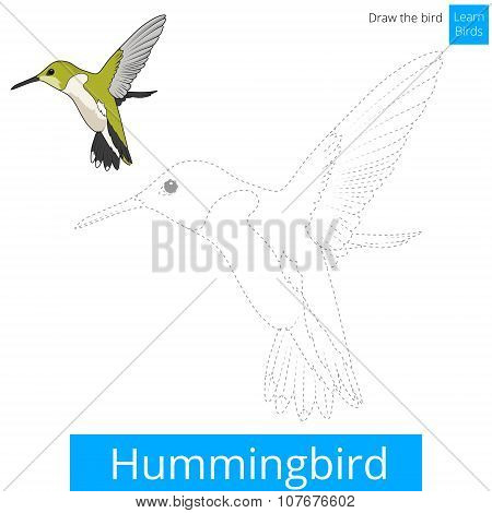 Hummingbird bird learn to draw vector