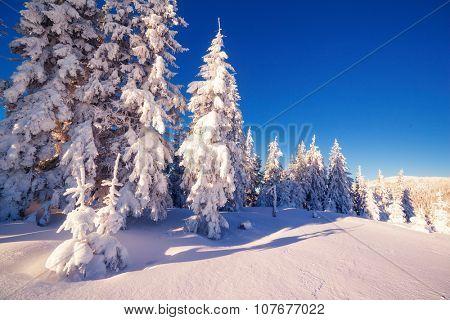Majestic winter landscape glowing by sunlight in the morning. Dramatic wintry scene. Location Carpathian, Ukraine, Europe. Beauty world. Instagram toning effect, blue filter. Happy New Year!