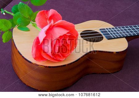 Rose And Ukulele