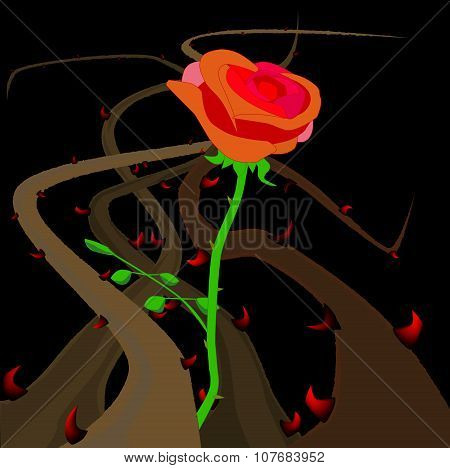 Rose Thorns And Briers