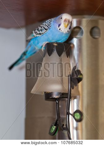 Budgie On Lamp