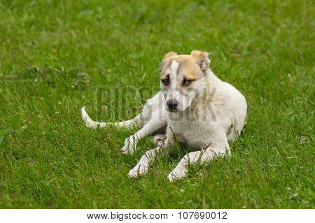 Sad stray puppy resting in spring grass