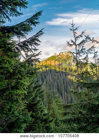 Mount Giewont seen through the spruce trees from the alpine trail in the Tatra mountains, Poland