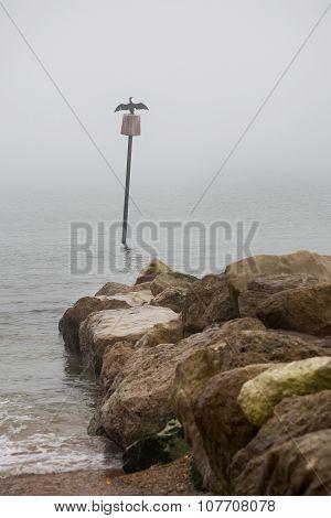 Perched cormorant