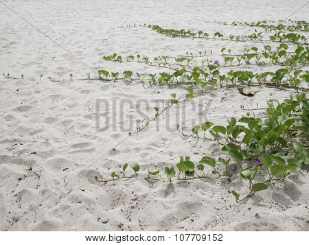 Green Leaf On Sand