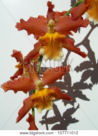 Red orchids on a branch