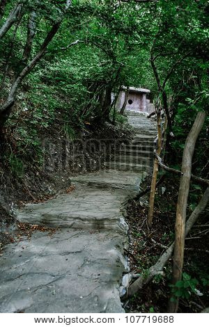 Path To Dolmen In The Middle Of Forest