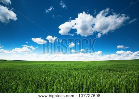 Green Wheat Field And Cloudy Sky, Farmland, Agricultural Scene