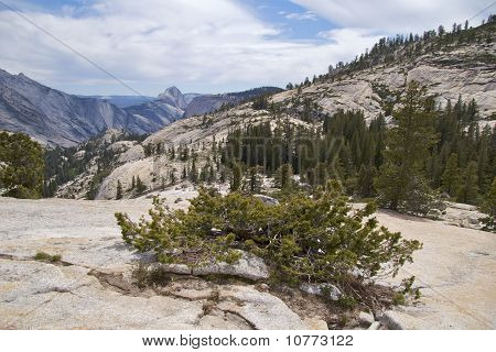 Vegetation, Olmsted Point, Yosemite