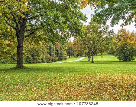 Trees And Meadow In Autumn