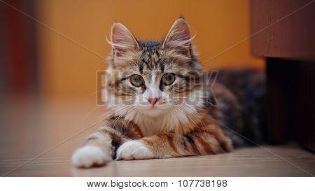 Portrait Of A Multi-colored Kitten