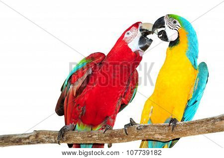 Two Big Parrots, Couple Of Beautiful Macaws Isolated On White