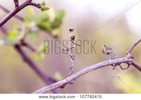 Little Dry Twig