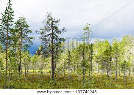 Scandinavian Wetland