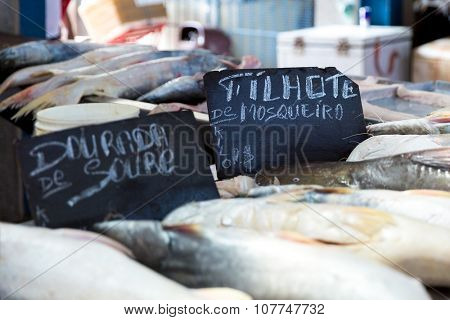 BELEM DO PARA, BRAZIL - CIRCA NOVEMBER 2015: Fresh fishes inside the famous Ver Peso Market in Belem do Para, Brazil