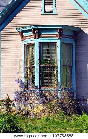 Bay Window And Wysteria