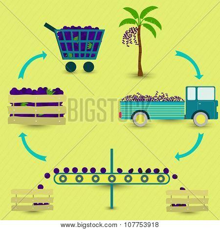 Process Of Acai (brazilian Fruit)