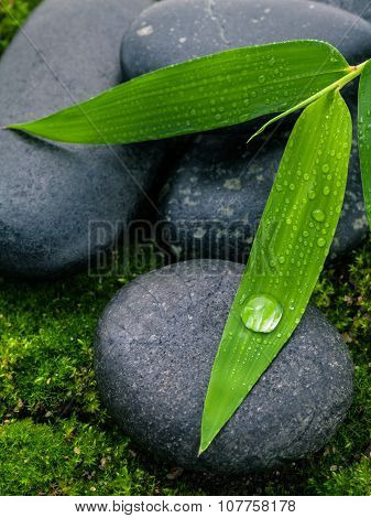 The River Stones Spa Treatment Scene And Bamboo Leaves With Raindrop Zen Like Concepts.