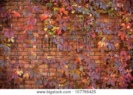 Autumn leaves on a brick wall