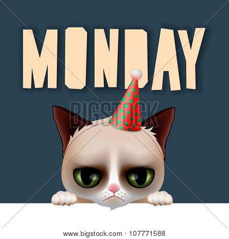 Monday morning with cute grumpy cat