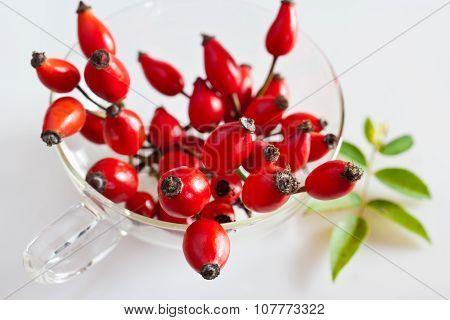 Canina Rosa With Ripe Red Berries / Rose Hip / Pometum