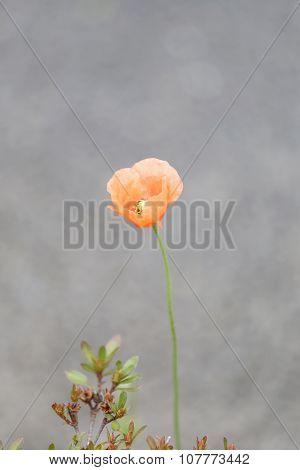 Orange Flowers Are Blooming.