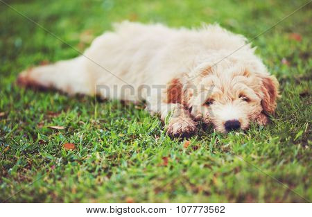 Adorable Cute Puppy Outside in the Yard