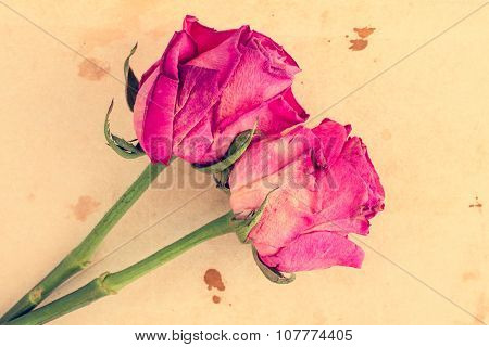 Two Pink Roses On Old Paper Background