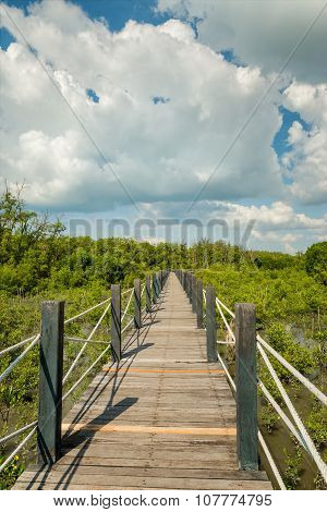 Wooden Bridge In Mangrove Forest.