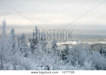 Polar Winter Landscape