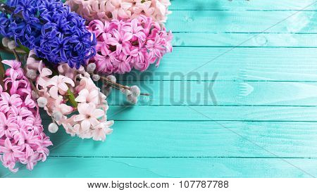 Background With Fresh Pink Hyacinths And Willow  On Green Painted  Wooden Planks