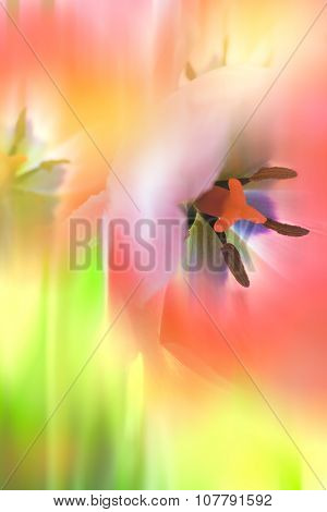 Gentle Abstract Flowers background, macro shot of tulips in blurred style