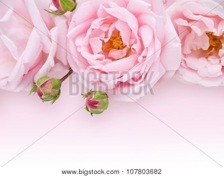 Pale Pink Roses Bouquet