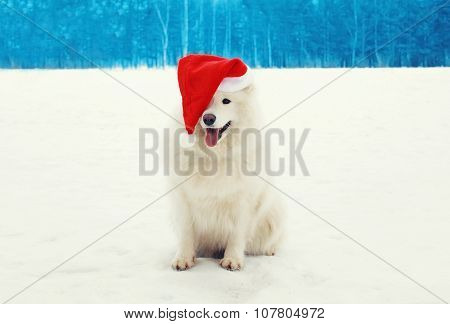 Happy Cheerful White Samoyed Dog Wearing A Red Santa Hat On Snow In Winter Day