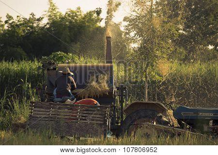 Farmer threshing rice