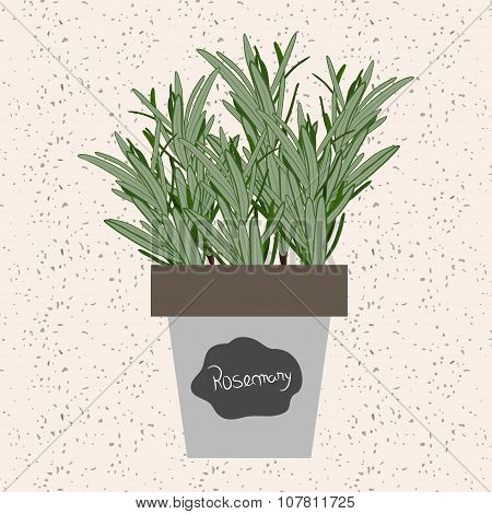 Vector - Fresh Rosemary Herb In A Flowerpot. Aromatic Leaves Used To Season Meats, Poultry, Stews, S