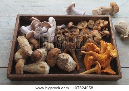 fresh wild mushrooms
