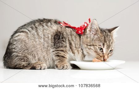 Hungry Little Kitten.