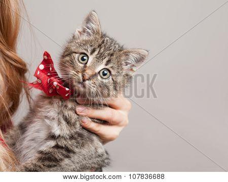Tiny Furball Cutie.