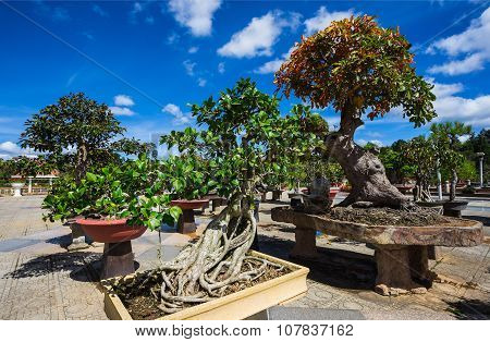 Bonsai In The Flower Park