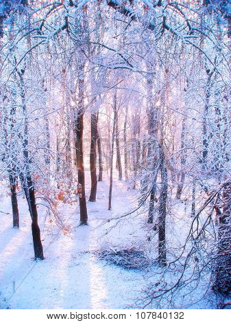 Winter Forest Landscape In Sunrise Light