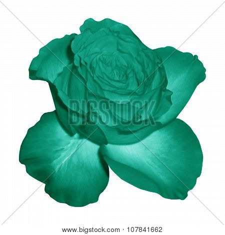 Heyday rose turquoise