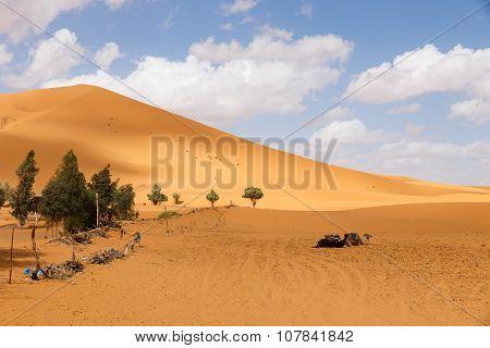 sand dune Sahara
